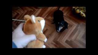 видео Интерактивная игрушка говорящая собака-повторюшка