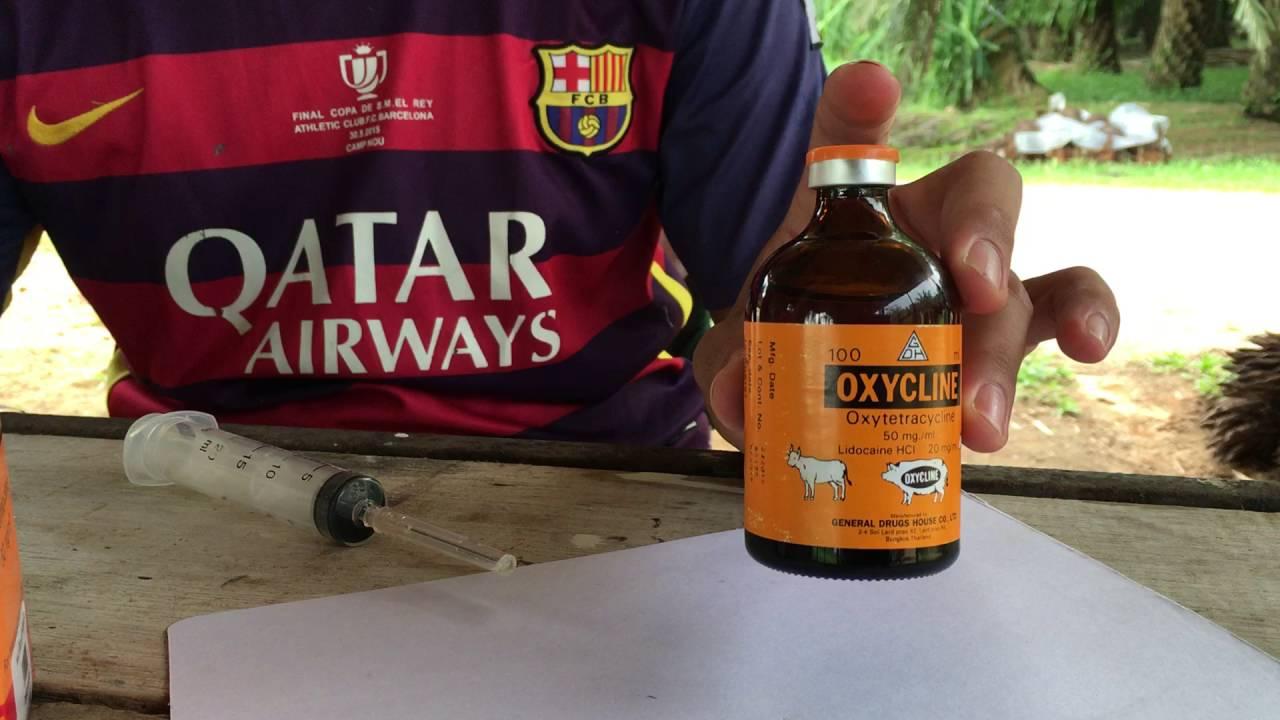 แนะนำยา Oxycline ใช้กับ วัว ควาย