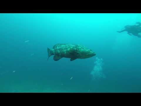 07 22 Scuba Diving   Castor Wreck