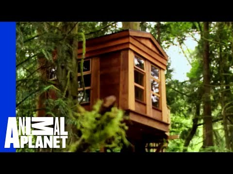 An Ancestral, Tribal Treehouse   Ultimate Treehouses
