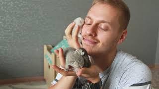 Родились котята #Генодетки37 в питомнике!