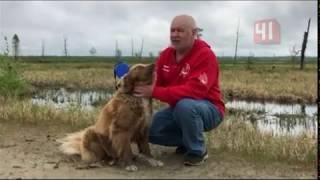 Потерявшаяся в тундре на Ямале собака сама нашла путь домой