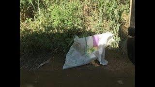 Ela achou um saco vazio na beira da estrada e fui procurar o que estava  dentro