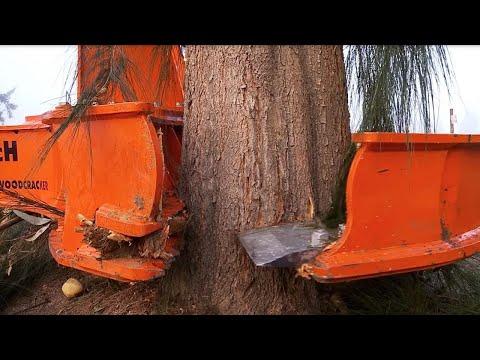 Dangerous Biggest Tree