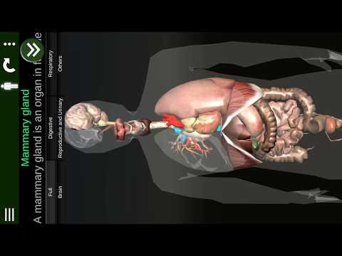 Internal Organs In 3D Anatomy