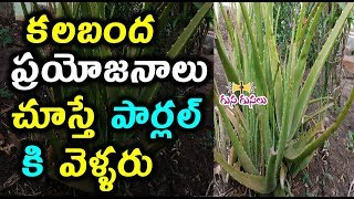 Alovera Health benefits | tips | side effects | for skin | for hair growth | Long hair | thick hair