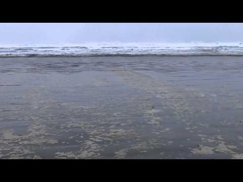 Personal LONG BEACH #1 Canada organic 100% natural WEST COAST TRAIL SEAWEED