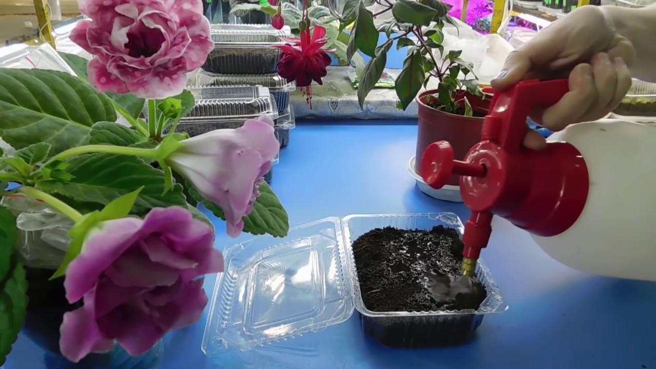 Красные розы 150см 390 руб. Красные розы 160см 420. Купить в 1 клик. Красные розы. Букет 5 красных роз высотой 150см. 1992 руб. Купить в 1.