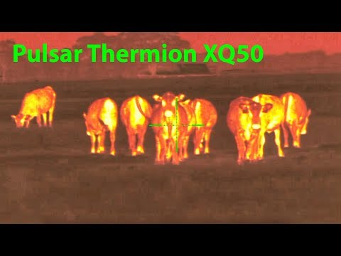 Pulsar Thermion XQ50 **REVEW**