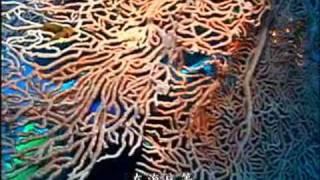寶貝海洋.珊瑚天堂