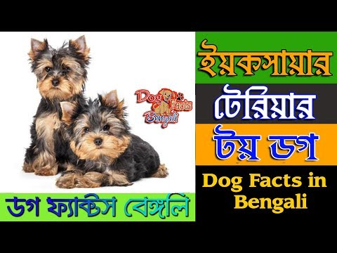 Yorkshire Terrier Dog facts in Bengali | Toy Dog | Terrier Dog | Dog Facts Bengali