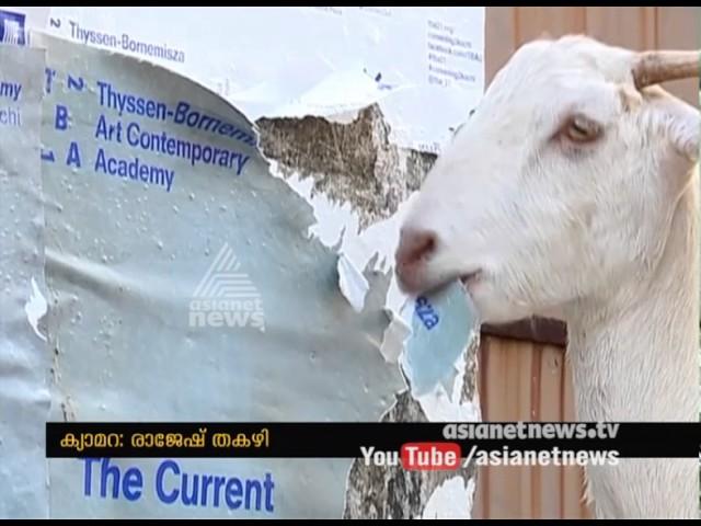 Lens: Goat eating paper