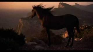 Black Dream - Black Stallion Music Video