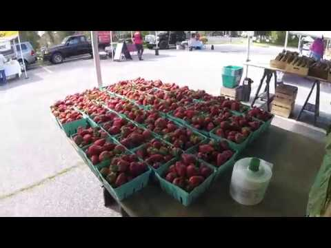 Hampton Blvd Farmers Market Week 4