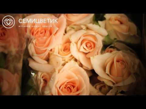 Обзор поставки: кремовые кустовые розы
