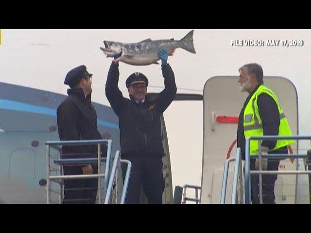 Copper river salmon arriving at Sea-Tac