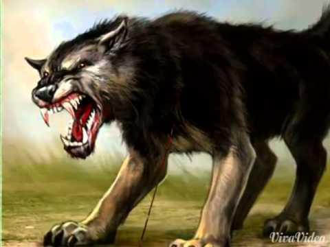 аниме волки фото