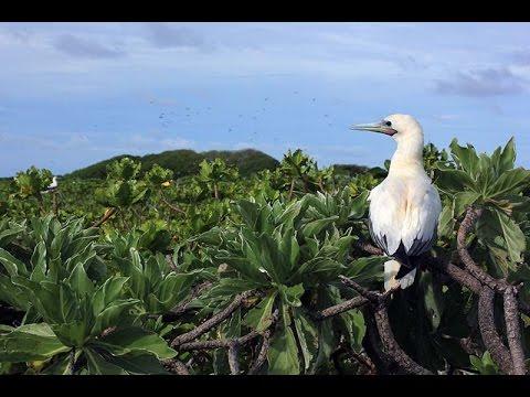 Ile Vache Marine Bird Habitat Restoration Reconnaissance
