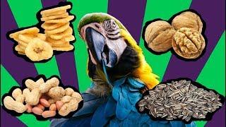 Красивый попугай Ара. Что будет если из 4 лакомств  попугай возьмет орех в ходе кормления ?!