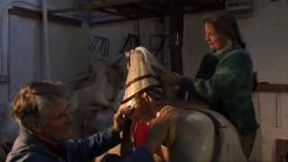 Tetbury Rocking Horse Works Tel: 01453 873853