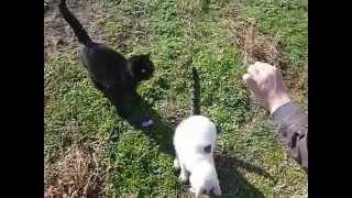 Кормление котов на анапском Высоком берегу