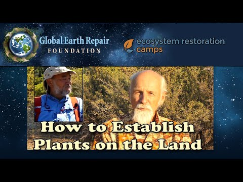How To Establish Plants in the Landscape