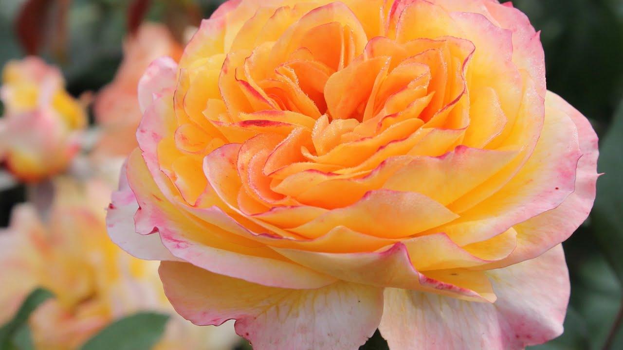 casse noisette valse des fleurs mp3