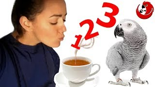 Gadajaca papuga Cezar - nauka liczenia przy herbatce