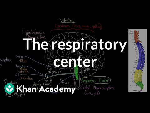 The respiratory center | Respiratory system physiology | NCLEX-RN | Khan Academy