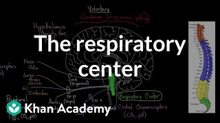 The Respiratory Center