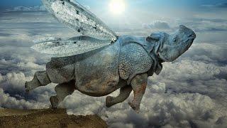 Система 2   Носорог Цирк Запашных