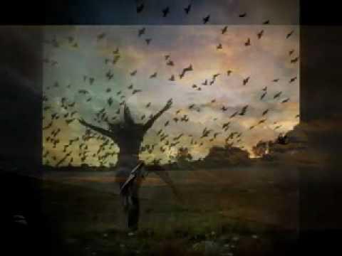 حسين الجسمي - _- الطير