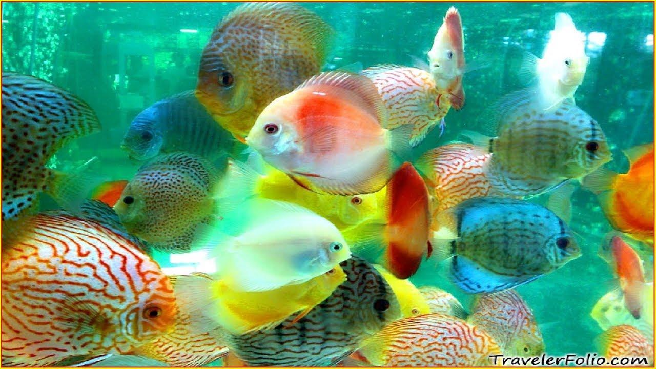 Beautiful Aquarium Fish in the Philippines - YouTube