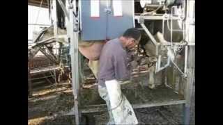 ANKA Hoof Trimming Crush. Cattle hoof care Chute: High efficient maintenance trimming