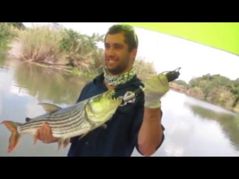 Tiger Fishing In Komatipoort