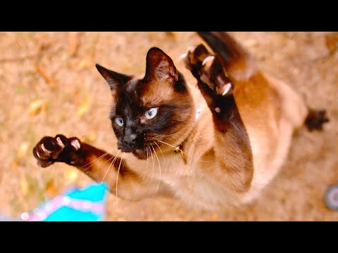 Cat Sprinting and Pouncing in 4K Slow Motion  The Slow Mo Guys