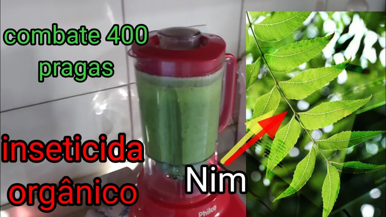 #comoGanharDinheiroNoSitio? inseticida natural para 400 pragas...