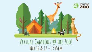 Virtual Campout At The Toronto Zoo