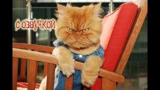 Приколы с котами – САМОЕ СМЕШНОЕ ВИДЕО В МИРЕ! Озвучка животных – МУРЗИК