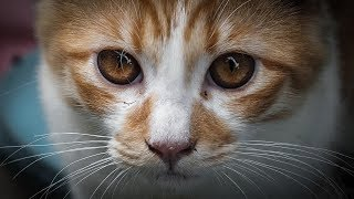 This Is What Everyone Gets Wrong About Cats
