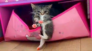 Маленькие котята Наши кошки и коты Компиляция Лучшие моменты из видео про котят канала Планета Алис