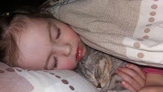Кошка Хлоя Спит с Ребенком 😻 Коты и Дети 🐱 Scottish Fold Cat