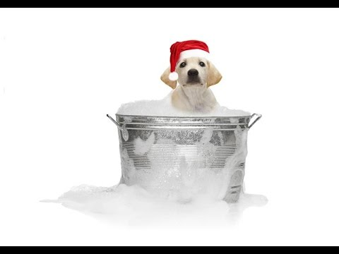 """""""Christmas Pets"""" """"Cats And Dogs Holidays"""" """"Funny Cute Animals"""""""