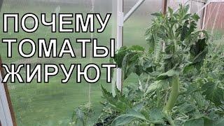 видео Томаты (помидоры) Томаты достигли верха теплицы