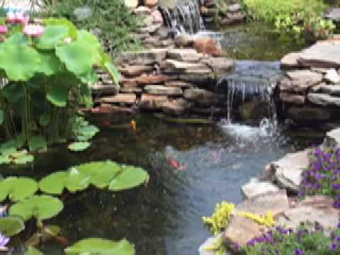 Blue heron koi fish protection water gardens ponds koi for Koi pool water gardens thornton