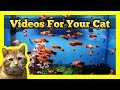 Videos for your Cat - Spotted Orange Mol