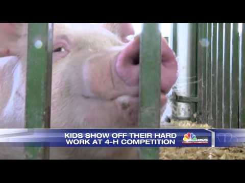 4-H Competiton at Dawson Co. Fairgrounds Helps Educate Kids