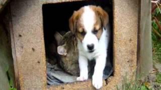 Kot śpi z psem w jednej budzie
