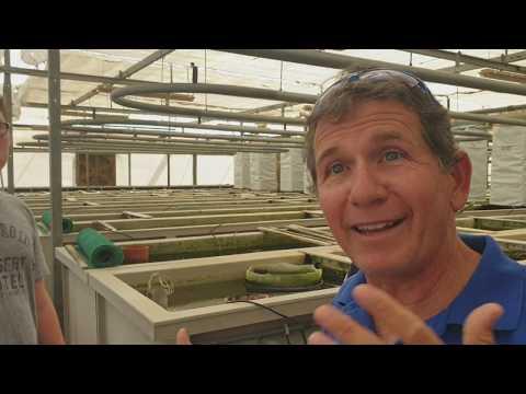 1 Million Black \u0026 Sailfin Mollie Fish Per Year On His Eco High Tech Fishfarm.