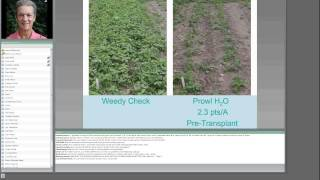 Strawberry Weed Management
